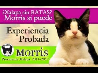 Кот Моррис бьется за кресло мэра мексиканского города